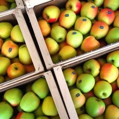 POMARIA: la festa delle mele in Val di Non